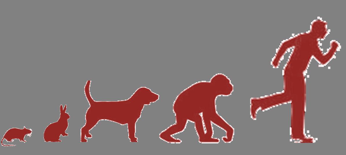 Del salto evolutivo